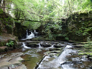 Local waterfall spot